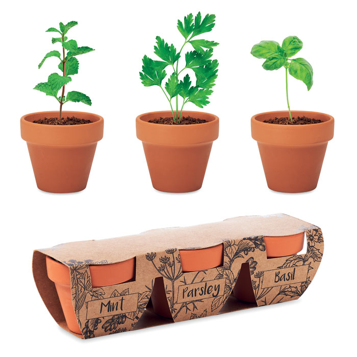 Terracotta 3 herb pot set