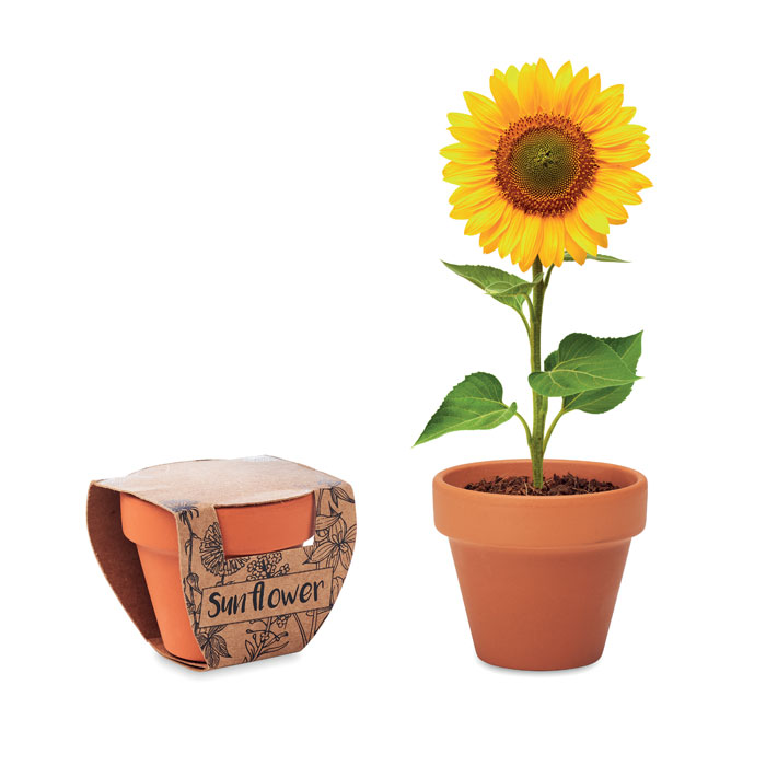 Terracotta pot 'sunflower'